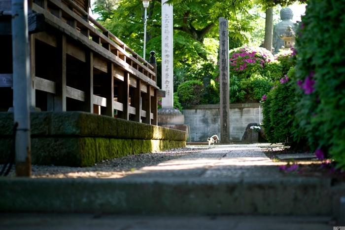 """堂々たる伽藍と堂宇が点在する名刹でも、ここ「護国寺」は、厳粛な場所というよりも、地域に根付いた""""癒やしの場""""。古くから猫が多く住み着いているように、境内はいたって静かで穏やか。寺社仏閣巡りに興味がなくても、のんびりと過ごすのにお勧めのスポットです。"""