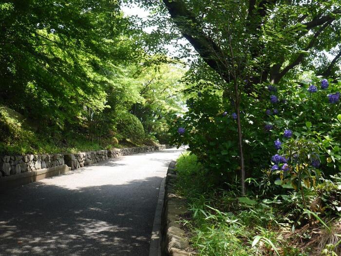 「鳩山会館」の入口は、先の「群林堂」から、音羽通りを江戸川橋方向へ歩いて7,8分。音羽通りに接する入口から、広やかなアプローチを4,5分程上ると、洋館の邸宅へと到着します。【6月下旬の「鳩山会館」玄関からのアプローチ】