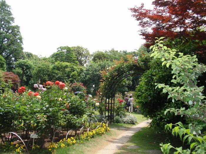 """春と秋のバラ咲く頃は、薔薇と洋館、英国風に整えられた庭園の""""山の手""""らしい格別な景観を楽しみに、例年多くの人々が来訪します。庭園には桜も植樹され、毎年4月初旬には、政界の重要人物が多く集まる「観桜会」が開催されています。  バラの見頃は、例年5月半ば~6月初旬頃(春バラ)、10月半ば~11月初旬頃(秋バラ)。桜の見頃は、他の東京地域に同じで、3月中旬~4月初旬頃です。【5月下旬の「鳩山会館」英国風庭園】"""