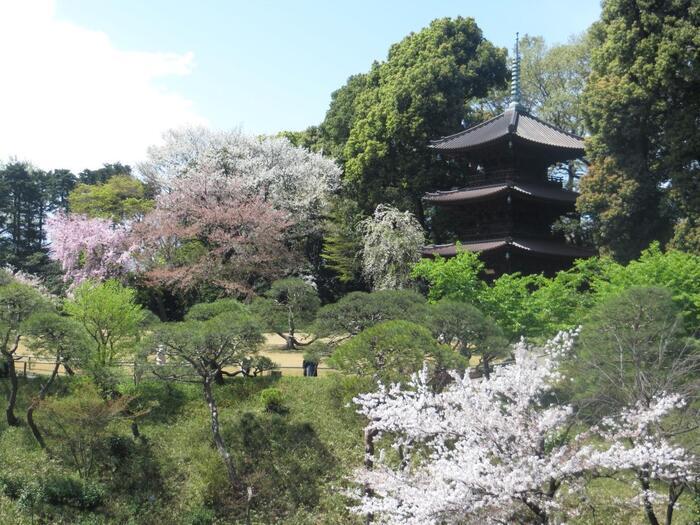 """庭園内には史跡が多く、東京の""""*三古塔""""と呼称される「三重塔」は、大正14年に「篁山竹林寺(たかむらやまちくりんじ/東広島市)」から移築したもので、国登録有形文化財に登録されています。 【4月初旬桜の頃の園内・三重塔付近(他二つ三重塔は「旧寛永寺五重塔」と「池上本門寺五重塔」)】"""