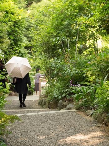 当庭園は、「林泉回遊式庭園」と呼ばれる庭園様式です。  かつて「つばきやま」と呼ばれた地形を生かした園路を進めば、起伏に富んだ景観、水や緑が織りなす様々な景色を楽しめます。  【*林泉回遊式庭園:池や築山、曲水や樹林など、移り変わる景色を眺めながら一回りすると、一巻の絵巻物を見終えるという庭園様式(5月中旬の園内散策路)】