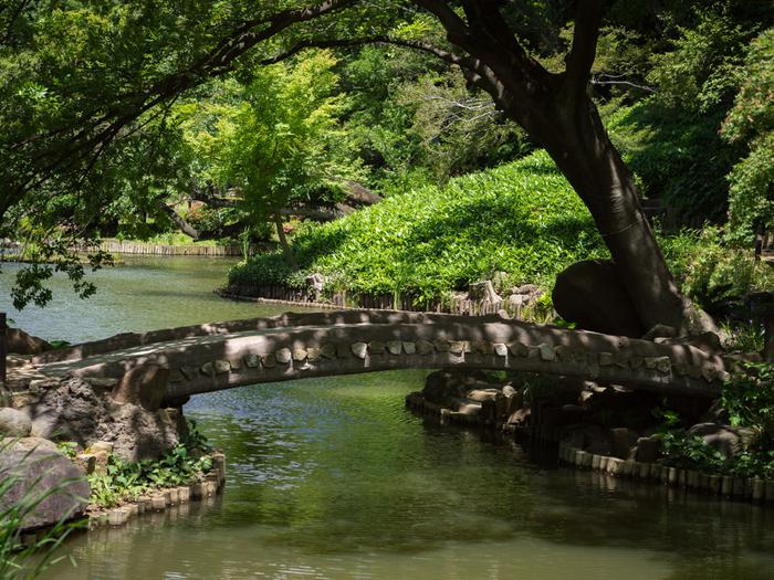 当園は、崖下の湧水と、関口台地から神田川へと至る地形を上手く活かした「池泉回遊式庭園」です。1万8500平米にも及ぶ敷地面積を誇る当園の魅力は、都心部とは思えないほどに豊かな緑と起伏に富んだ自然景観、そして情緒ある景色を楽しめることです。【5月中旬の「肥後細川庭園」】