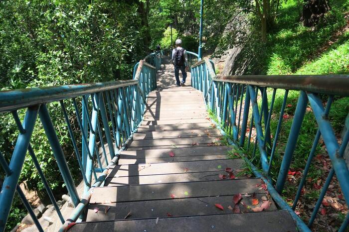 神田川川沿いに細長く伸びる「江戸川公園」は、かつてあった神田上水の堰(せき/川水をせき止める所)を保存するために大正期に造られた公園です。【関口台地南斜面の雑木林に設置された空中遊歩道】