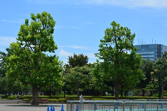 """""""材木のまち""""として栄えてきた木場。かつては、このあたりにも材木業関連の倉庫や貯木場などが多くありましたが、機能が新木場に移転したことを機に、「木場公園」ができました。貯木場ゆかりの地だったことを残すために、公園の池では「木場の角乗」という伝統芸が毎年行われています。"""