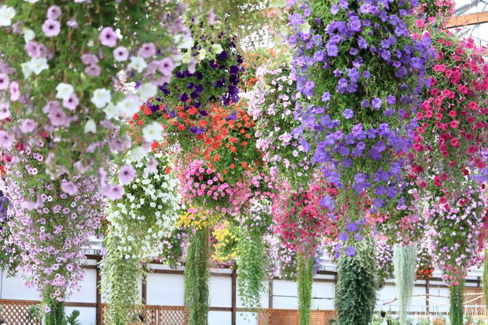 """掛川を代表する観光スポットのひとつが「掛川花鳥園」です。JR掛川駅から徒歩12分、タクシーで3分ほどとアクセスも良く、お天気を気にせず遊べると家族連れにも人気。""""花と鳥とのふれあい""""がテーマで、温室にはベゴニアやスイレンなどが咲き誇り、フォトジェニックなスポットも多いのでカメラ女子にもおすすめです。"""