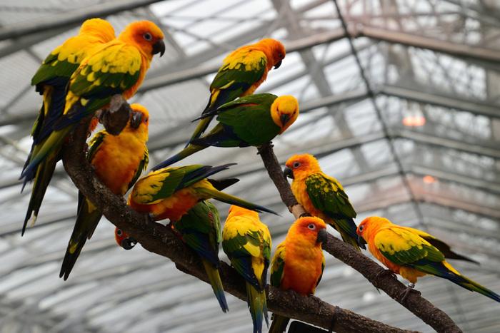鳥が放し飼いになっているエリアもあり、写真のコガネメキシコインコなど色鮮やかな鳥たちを間近に見ることも。エサやりもできるので、愛らしい姿に癒されますよ。