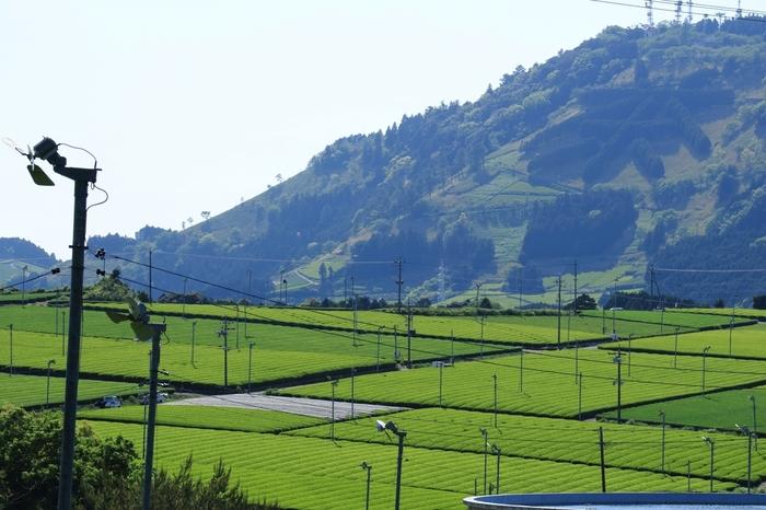 日本の真ん中でゆったり観光♪お茶どころ「掛川」で自然や文化にふれる旅