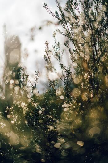 新生活に疲れたら、ゆるりとひと息つきましょう。わたしを癒す週末のすごし方
