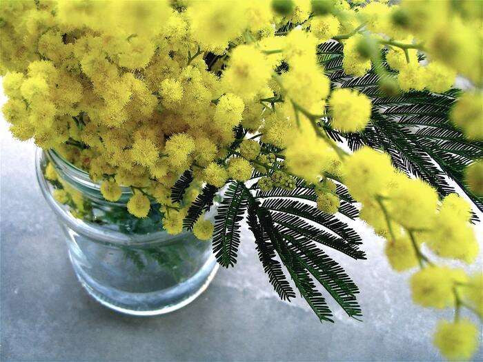 指先から春の訪れ。「ミモザネイル」で楽しむ大人のフラワーアート