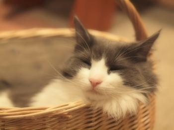 都会の古びた一軒家で暮らすサヨコ。たくさんの猫と暮らすサヨコの仕事は、猫を貸し出してまわる「レンタネコ」という商売です。一風変わった商売だけど、家に帰っても一人の女性や夫に先立たれた未亡人などが猫を借りにきます。