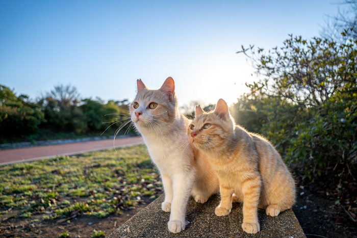 1話完結型なので気軽に観やすく、毎回小さな事件が起きるけれど、玉之丞のかわいいパワーでなんだかんだ事なきを得ます。猫とは言葉を交わせないのに、瞳から思いが伝わってきてなんとも言えません。玉之丞役の猫、「あなご」ちゃんも人気がありますよ。