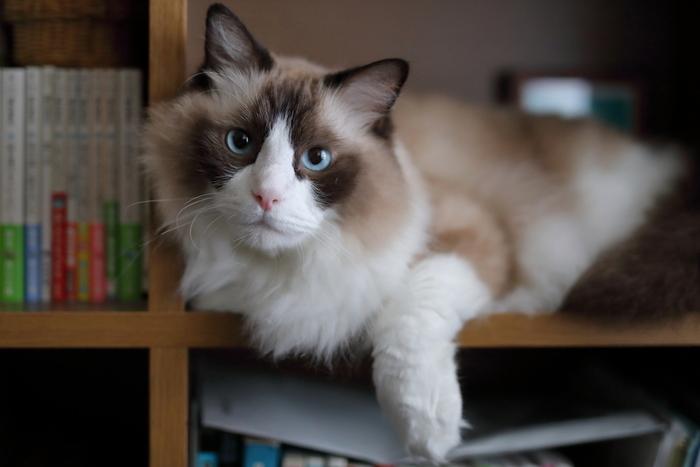 売れっ子漫画家の麻子さんは、アシスタントのミナミと一緒に締め切りに追われる日々を過ごしていますが、愛猫のサバが亡くなったことで、漫画が書けなくなってしまいます。そんなときに出会った子猫が、グーグー。
