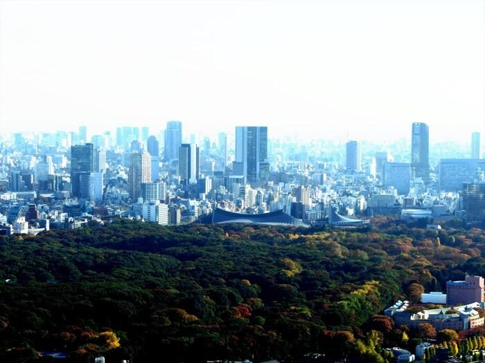人工的に作られた森とは言え、明治神宮境内にある鎮守の守は、大都会である東京都の一等地に立地しており、気軽にアクセスすることができる森林浴スポットとして、抜群の人気を誇ります。