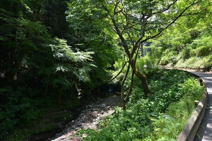 高尾山は、東京都八王子市にそびえる標高599メートルの山です。高尾山は、東京の都心から近いこともあり、年間を通じて大勢の観光客や登山客が訪れる森林浴スポットとなっています。