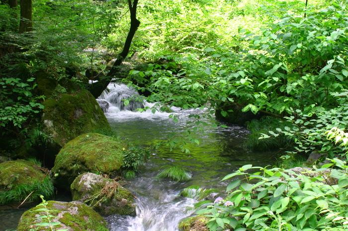 心地よい清流のせせらぎに耳を澄ませながら、美しい緑の樹々を眺めながら、よく整備された秋川渓谷の遊歩道を歩く心地よさは格別です。