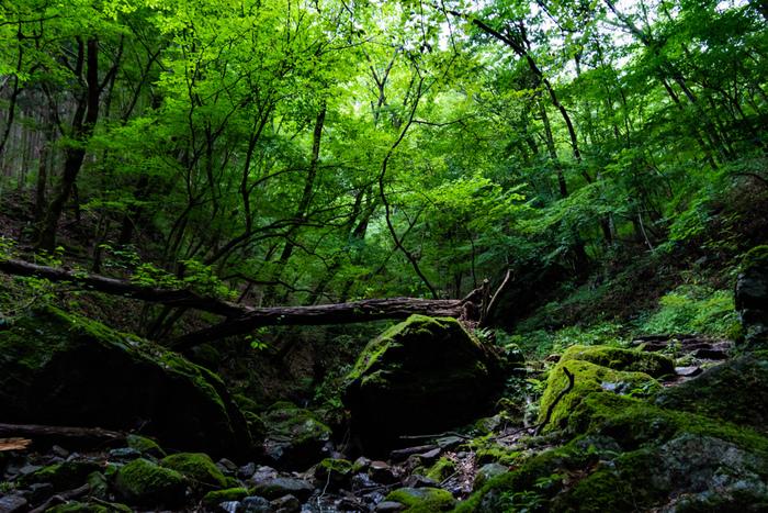 東京都青梅市に位置する御岳山は、標高929メートルの山です。ここは古くから山岳信仰の場として知られており、山頂には武蔵御嶽神社が建立されています。