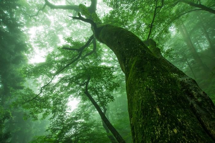御岳山の森は日中でも薄暗く、深山幽谷とした雰囲気です。鬱蒼とした緑の葉に覆われた御岳山のハイキングコースを歩いていると、ここが東京都内であることが信じられなくなるほどです。