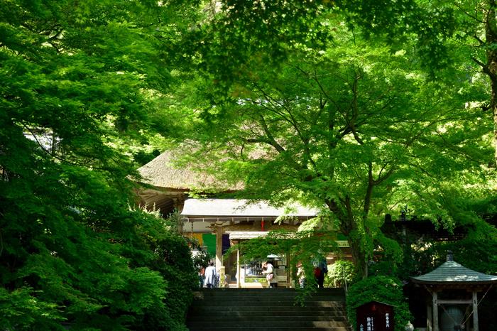 佐賀県三養基郡基山町にある「大興善寺」。契山の麓にある天台宗の古刹で、行基によって創建されました。春に5万本のつつじが咲き誇ることから、別名「つつじ寺」とも呼ばれ有名ですが紅葉も人気です。