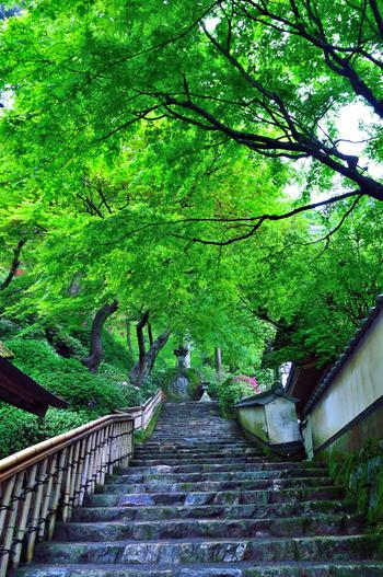 初夏ならではの風景。爽やかな風を感じながら、新緑の下をゆっくり散策するとリフレッシュできそうです。