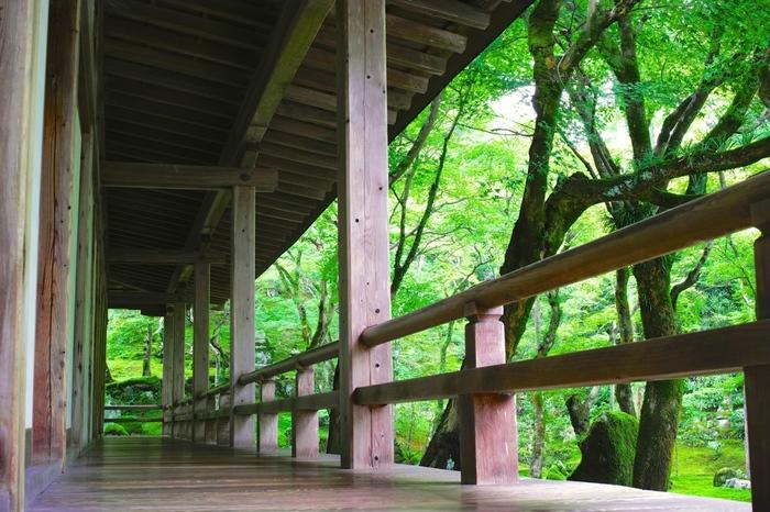 新緑の季節は青もみじと青苔それぞれが爽やかで美しい。若葉が茂る青もみじと青苔の美しさにしみじみと見入ってしまいます。