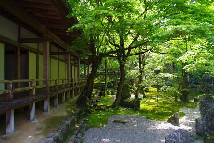 福岡県太宰府市にある「光明禅寺」。1273年に鉄牛円心和尚によって創設された禅寺で、 太宰府天満宮の結縁寺としても知られています。別名「苔寺」とも呼ばれ、美しい青苔の庭を楽しめます。西鉄太宰府駅から徒歩5分でアクセスも良く、気軽に訪れられるのも嬉しいポイント。