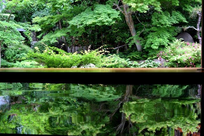 """水面に映っているように見えますが、実はお寺の畳を6畳ほどはがして、その床にアクリル板を設置しているんです。この美しい青もみじの光景は、寿福寺の名物となっていて、京都の「実相院」の""""床もみじ""""から発想を得たんだそう。"""