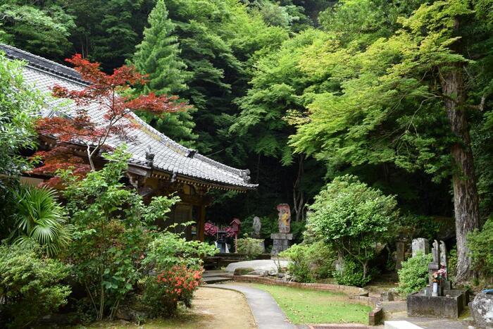 """長崎県佐世保市にある「寿福寺」。1582年に早岐に長福寺という名前で創建され、1635年に現地に移築後に改名しました。家内安全・交通安全・疫病退散などのご利益があり、紅葉の名所としても知られています。そんな寿福寺には、""""逆さ紅葉(新緑)""""という珍しい青もみじスポットがあるんです。"""