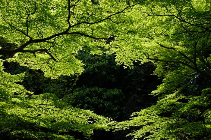 箕面公園は、大阪府内でも指折りの紅葉の名所として名高い場所です。紅葉のイメージが強い箕面公園ですが、グリーンシーズンの景色も素晴らしく、春から夏にかけては恰好の森林浴スポットとなります。