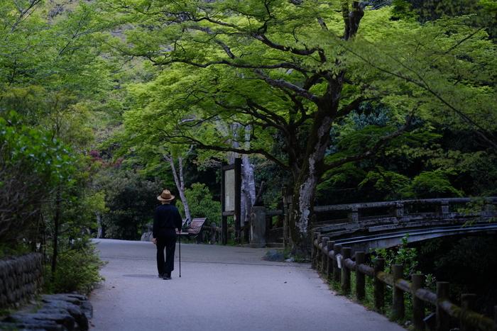 箕面公園では、公園の入口から箕面川の渓流沿いに「滝道」と呼ばれる遊歩道が整備されています。眼前いっぱいに広がる豊かな森を眺めながら、樹々の間から木漏れ日が差し込む滝道を歩く気持ち良さは格別です。