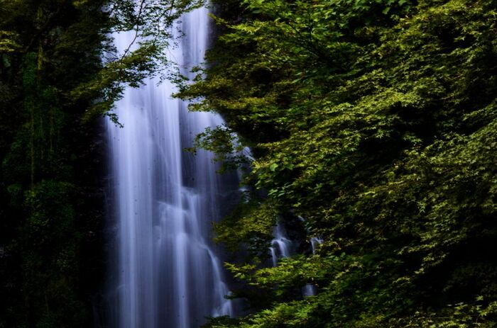 箕面公園の入口から滝道を歩いてゆくと、「日本の滝百選」に選定されている落差33メートルの箕面大滝に辿り着きます。箕面大滝の滝壺周辺は夏場でも涼しく、滝が発するマイナスイオンをたっぷり浴びながら心身をリフレッシュすることができます。