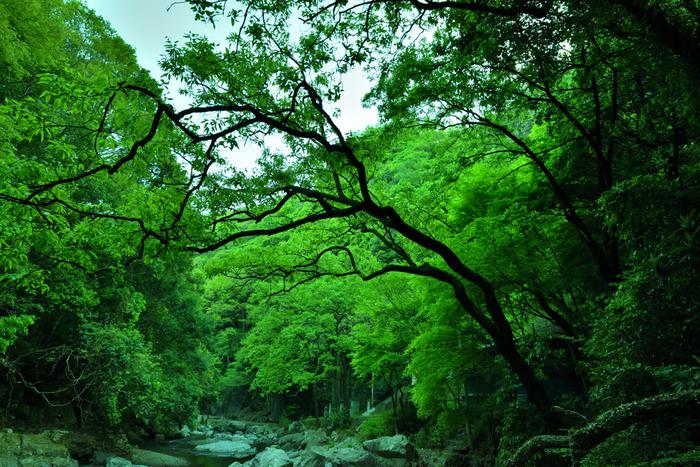 摂津峡は、大阪府と京都府の境界に位置する高槻市中央部をとうとうと流れる芥川の上流に広がる渓谷で、大阪府の名勝に指定されています。