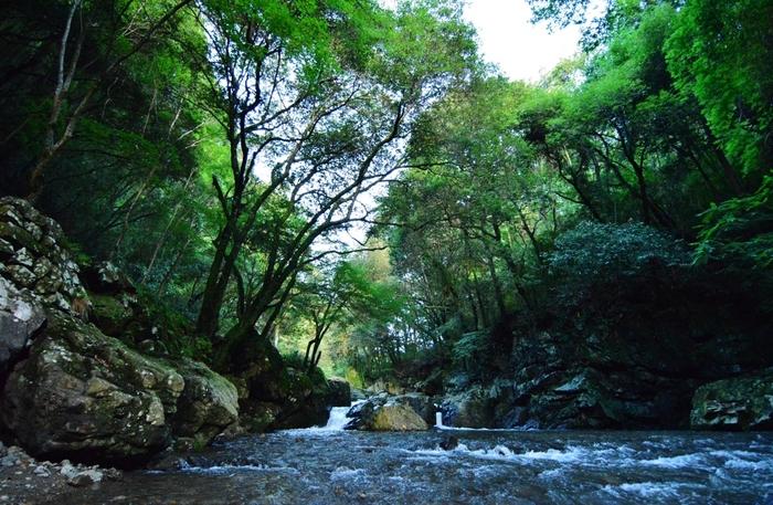 北摂でも指折りの景勝地となっている摂津峡では、芥川沿いに遊歩道が整備されており、気軽に森と清流が織りなす渓谷美を眺めながら森林浴を楽しむことができます。