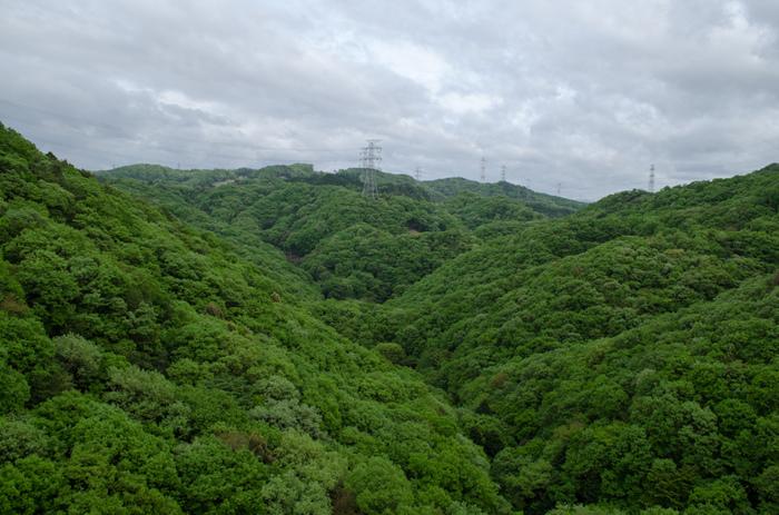 星のブランコからは、四季折々で美しい景色を見せてくれるほしだ園地を360度の大パノラマで一望することができます。秋の紅葉スポットとしても人気のほしだ園地ですが、グリーンシーズンに星のブランコを渡ってみると、緑の絨毯を敷き詰めたかのような豊かな森を一望することができます。