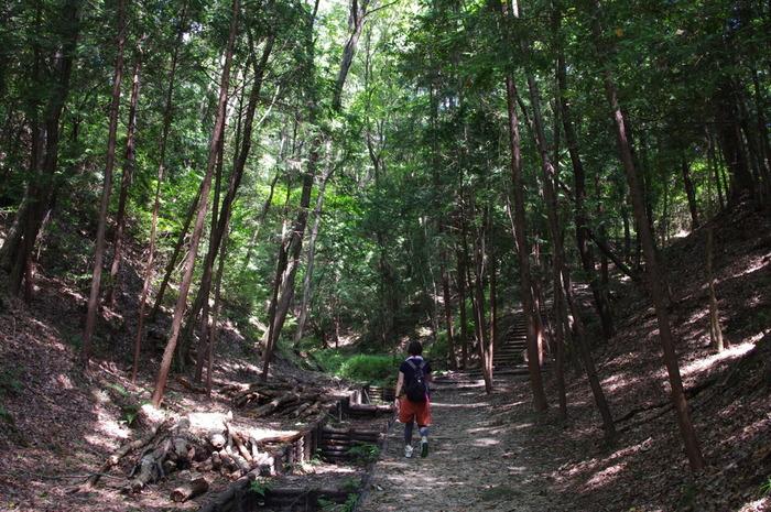 ほしだ園地は、交野市に位置する自然の地形を活かして整備された自然公園で、100ヘクタールという広大な敷地面積を誇ります。市民の憩いの地となっているほしだ園地は、「大阪府民の森」の一つになっており、豊かな緑の森が生い茂っています。