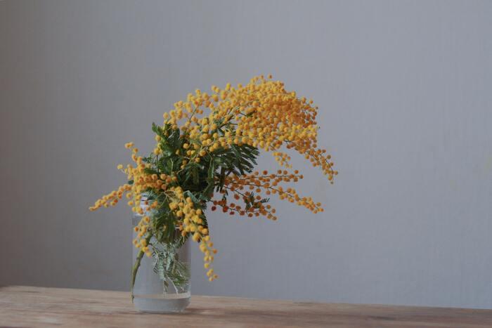 こぼれそうな姿が愛らしいミモザ。たくさんの茎が付いているものを選べば、華やかさがアップします。