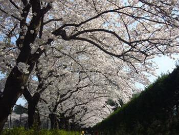 広大な敷地を誇る駒沢オリンピック公園は、芝生のエリアはもちろん体育館や陸上競技場などもあり、学生時代に訪れた経験がある方もいらっしゃるのではないでしょうか。