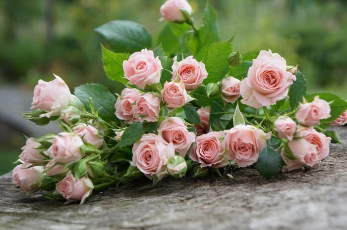 1輪で見る人を魅了させるバラは、品種も色の種類も豊富で、初心者の方でも取り入れやすくオススメ。