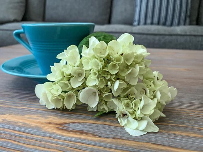 可愛い形の花片が集まったアジサイ。アジサイと言えば青や紫を想像しがちですが、写真のような淡い色味のアジサイも最近はよく見かけるようになりましたね。ぜひ取り入れてみてください!