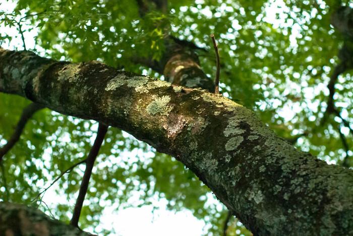 心地よい空気に包まれて心身をリフレッシュ!《奈良県》森林浴スポット