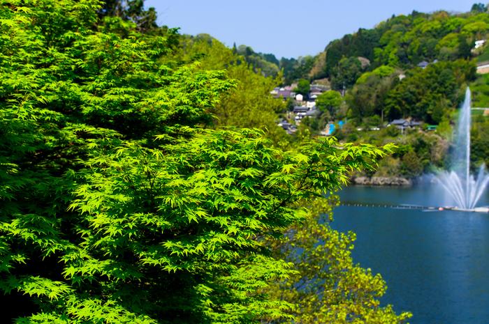 ダム湖として形成された月ヶ瀬湖の静かな水面と、湖を取り囲む周囲の豊かな自然が織りなす景色は、まるで一枚の絵画のような素晴らしさです。
