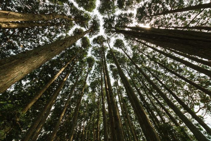 森林浴は、私たち人間に様々な健康的な効果を与えてくれる期待がされています。例えば身体の疲れやイライラの原因となっている「ストレスホルモンの減少」「副交感神経の活発化」などのほか、「血圧・脈拍数低下」「免疫力UP」など、森林浴をすることによって様々な効果が期待されており、科学的に実証されつつあります。