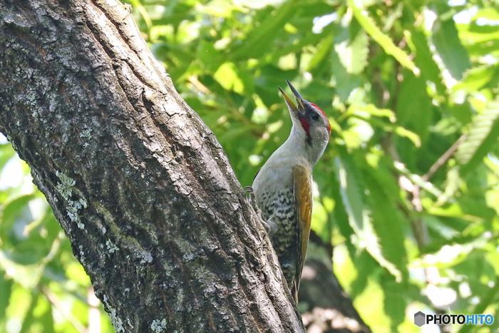 自然豊かな生駒山には、数多くの野鳥が生息しています。ここではバードウォッチングを楽しみながら森林浴をすることもできます。