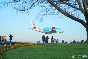 「成田市さくらの山」は、成田空港の外側から飛行機の離着陸を間近に眺めることができる公園。小高い丘には、桜をはじめ季節の花々が咲き誇り、美しい景観と飛行機のコラボを大いに満喫することができます。臨場感ある飛行機の姿に、子どもも大人もテンションが上がること間違いなしです。