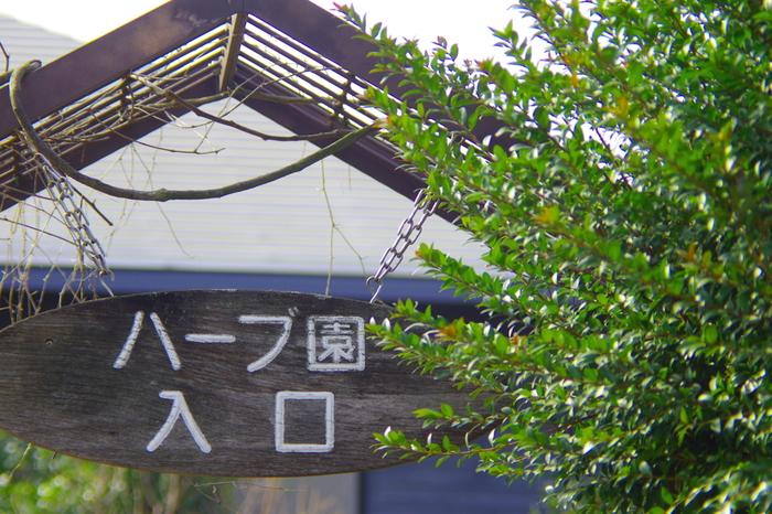 香りや味に何らかの作用があり、食用、薬用、防虫などに使われるとなれば、日本で昔から愛用されている身近な植物でも「ハーブ」と言えるものがあるのではないでしょうか。それらを改めて「日本のハーブ」として、西洋のハーブと同じように生活に取り入れてみると、活用の幅が広がりそうです。ここでは、身近な「日本のハーブ」についてその特徴だけでなく、育て方や取り入れ方について、ご紹介していきたいと思います。