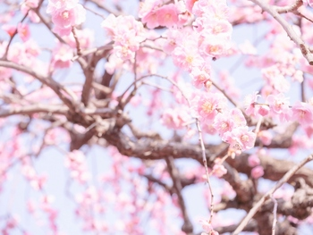 名古屋市農業センターは、「delaふぁーむ」という愛称で親しまれる人気の施設です。小動物とのふれあい体験など小さいお子様も嬉しい催しや、家畜・植物の栽培などを見学できます。また、しだれ梅の名所としても知られ、毎年2月~3月には約700本もの梅の木が色づきます。