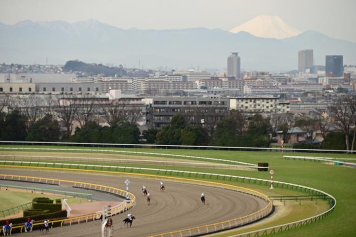 府中駅から15分のところにある「東京競馬場」。府中市と言えばここをイメージする方も多いかもしれません。大パノラマで見るレースは大迫力!晴れた日には青空が広がりとっても気持ちがいいですよ。