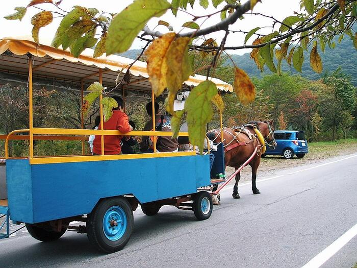 榛名湖の風物詩である「トテ馬車」もおすすめ。ポクポクと蹄の音を響かせながら、湖畔をゆっくりと歩いてくれますよ。ツツジや山桜などの草花をゆったり眺めながらのひとときも、旅の楽しみのひとつではないでしょうか?