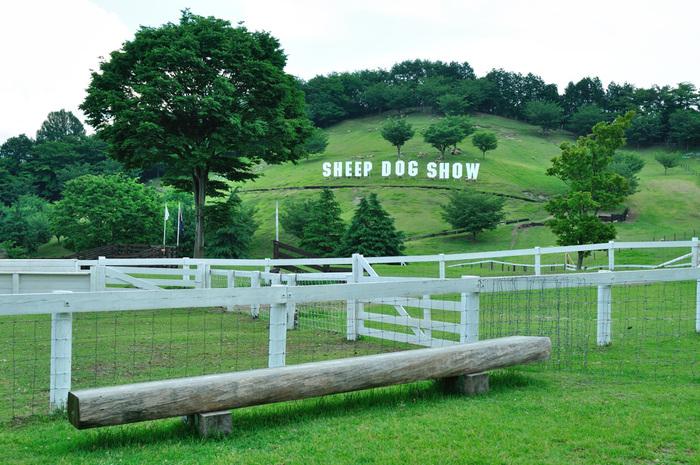牧羊犬が放牧された羊たちを一か所に集める「シープドッグショー」も迫力満点。ホイッスルの音だけで右に左にと走り回る牧羊犬の賢さにもびっくりです。時期によっては羊の毛刈りを見ることもできますよ。敷地内には売店もあるので、お昼を食べながら芝生でのんびり、という過ごし方も気持ち良さそう。