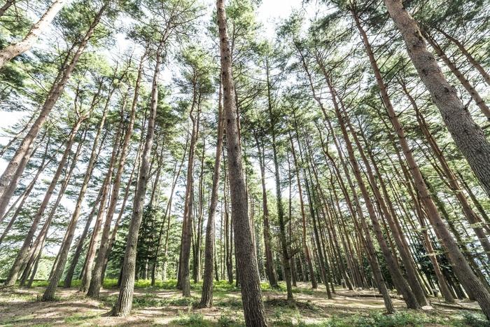 """長野県伊那市にある「pioneer plants(パイオニアプランツ)」は、""""豊かな暮らしを通して豊かな森を作る""""をモットーに家具作りを行っているブランドです。伊那谷のアカマツを使い、家の中でも外でも手軽に使える無垢材の家具を生み出しています。森の木を使うことできちんと手入れがなされ、豊かな森に繋がる。そんなより良い環境を目指して活動しています。"""