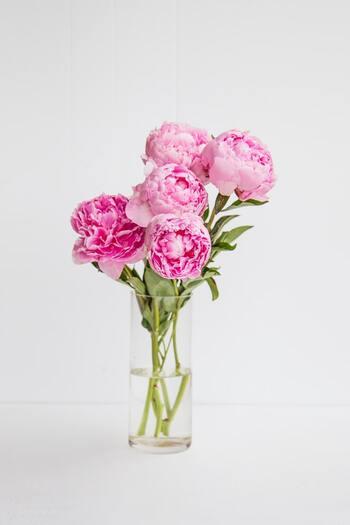お部屋や窓際で美しい花や植物たちを育ててみませんか?自分の愛情を植物たちに注ぐことで、自分自身が優しく柔らかい気持ちになれます。また花や植物たちが日々成長する姿をみていると、その生命力や力強さにエネルギーをもらえます。コンビニで飲み物を一本買うかわりに、お花屋さんで季節の美しい花を一輪選んで迎え入れてみましょう。